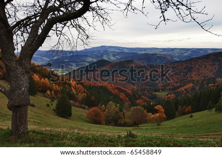 Autumn at Black Forest, Germany - stock photo