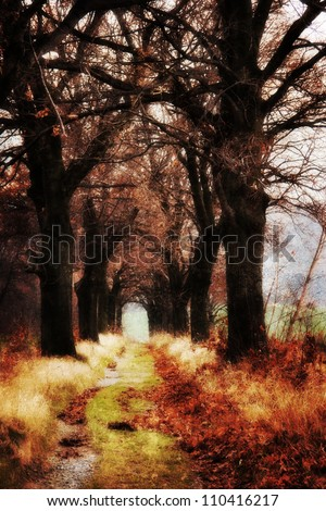 Autumn avenue with the fallen leaves - stock photo