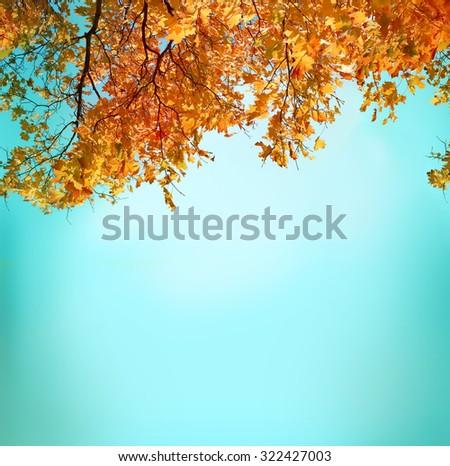 autumn background - stock photo