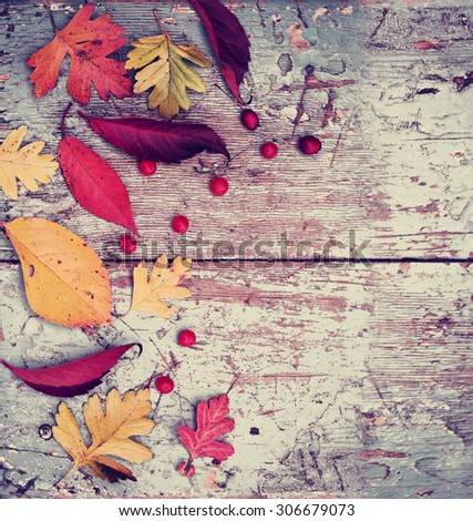 Autumn background/ Autumn leaves and berry as a heart over wooden background/Thanksgiving day concept   - stock photo