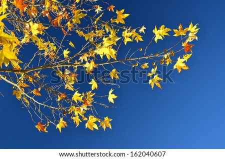 autumn background blue sky yellow leaves sunny day - stock photo