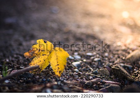 autumn, background,fall, forest, leaf - stock photo