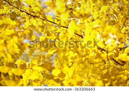 autumn background-fall-seasons - stock photo