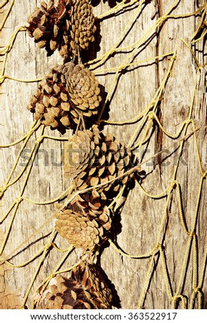 autumn background from pine cones - stock photo