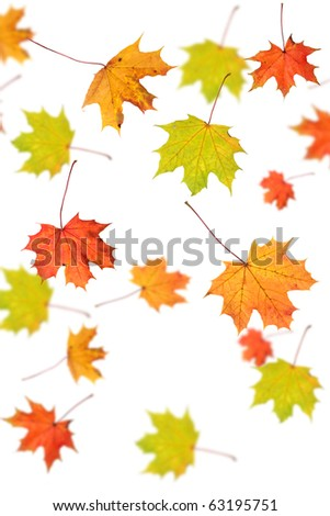 Autumn background - maple leafs falling down, isolated on white - stock photo