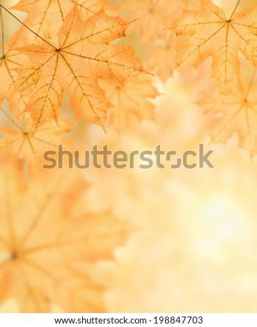 autumn background of many big yellow maple leaf, horizontal photo collage - stock photo
