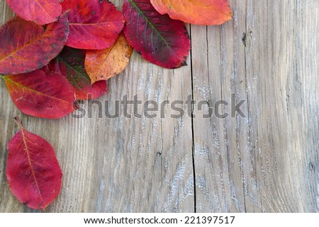 autumn background, old wooden board with red colored leaves in the corner, copy space  - stock photo