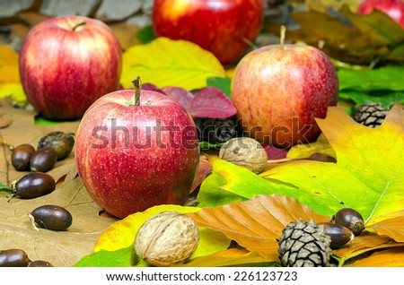 Autumn background with pine cones, acorns, walnutt and apples - stock photo