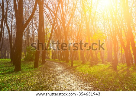 Autumn Background with Trees on Green Grass Covered Dry Foliage, Sunbeams Shining Through Branches and Road from Bricks - stock photo