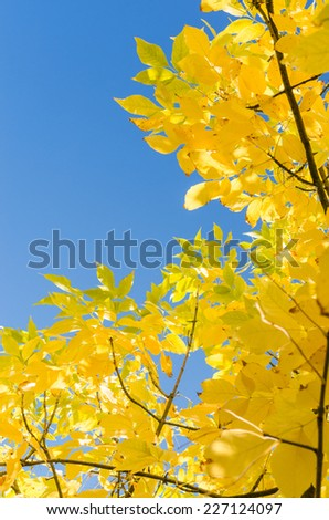 Autumn background with yellow foliage over blue sky. Vertical frame with free copyspace place for your text - stock photo