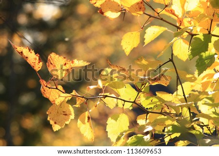 Autumn background, yellow leaves, sun, branches, falling leaves - stock photo
