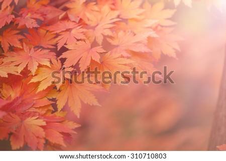 Autumn backgrounds [Soft focus] - stock photo