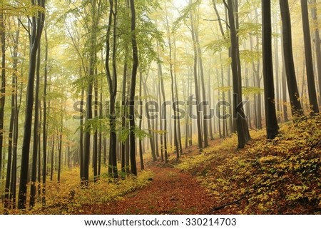 Autumn beech forest in late October. - stock photo