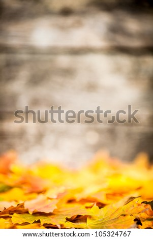 Autumn border from fallen maple leaves on old wooden background. Very shallow depth of field - stock photo