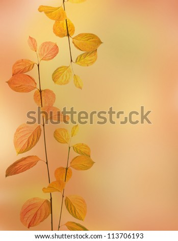 autumn branches and leaves border on orange background - stock photo