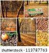 Autumn collage - Collection of autumn photos - stock photo