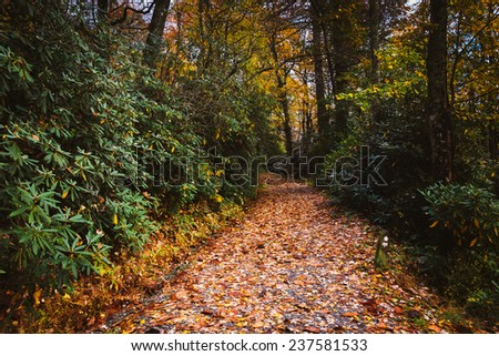 Autumn color along a  trail at Moses H. Cone Park, on the Blue Ridge Parkway, North Carolina. - stock photo