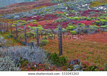 Autumn Color in Big Sur, California - stock photo
