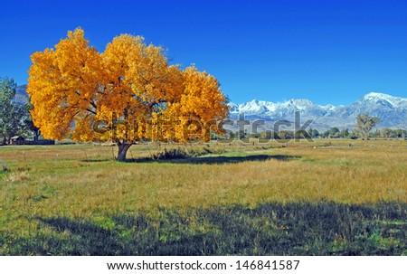 Autumn Color, Sierra Nevada Mountains, California - stock photo