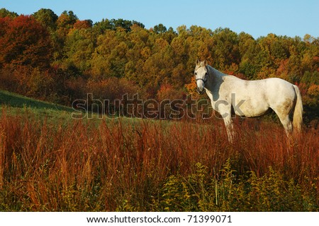 Autumn color with White Horse, Webster County, West Virginia, USA - stock photo