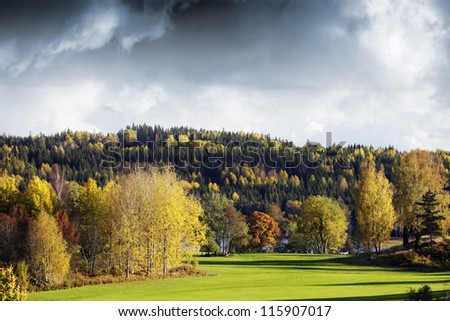 autumn colored landscape, sweden, dark clouds moving in. focus on the cluster of tree-trunks. - stock photo