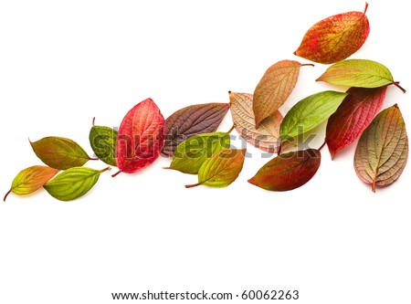 Autumn colored leaves falling isolated on white - stock photo