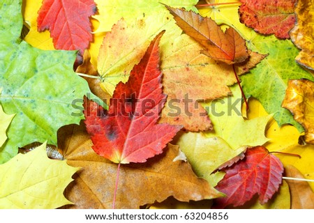 autumn colorful maple leaves background - stock photo