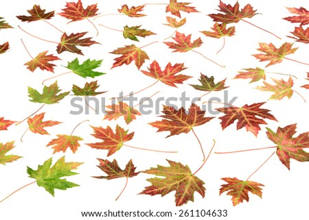 Autumn colors autumnal maple leaves background - stock photo