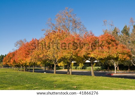 Autumn colors in a Silicon Valley Office Park, Sunnyvale, California - stock photo