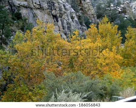 Autumn Colors in Arizona - stock photo
