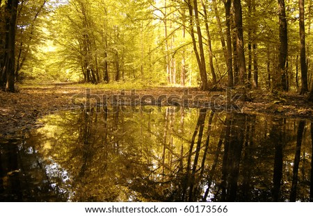 autumn colors of a beautiful forest reflecting in water - stock photo