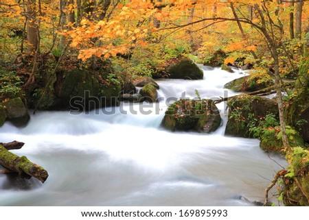 Autumn Colors of Oirase Stream, Aomori, Japan - stock photo