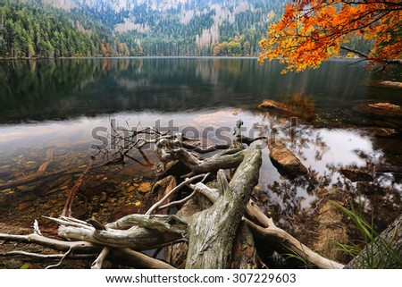 Autumn colors on Glacial Black Lake surrounded by the forest in South Bohemia - stock photo
