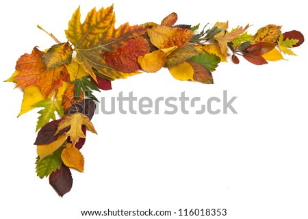 Autumn composition with colorful leaves of different trees in a corner of the frame on a white background - stock photo