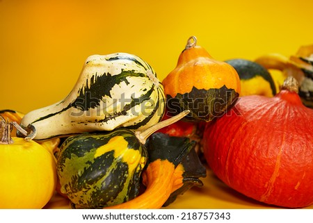 Autumn concept with seasonal pumpkin - stock photo
