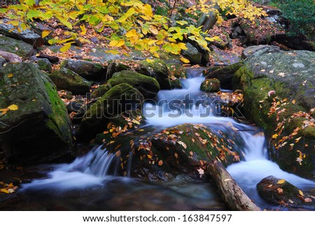 Autumn creek closeup with yellow maple trees and foliage on rocks in forest with tree branches.  - stock photo