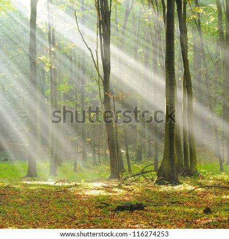 Autumn dawn - stock photo