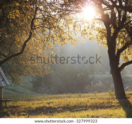 Autumn dawn in forest, unny autumn morning beneath an apple tree White frost covered, Latvia - stock photo