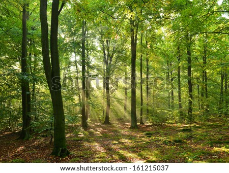 Autumn dawn in magic forest - stock photo
