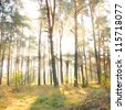 Autumn dawn in pine forest Poland - stock photo