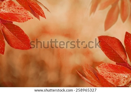 Autumn design background with colorful red  - stock photo