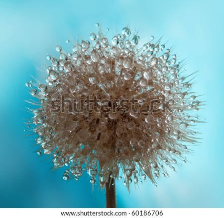 Autumn dry flower with water drops - stock photo