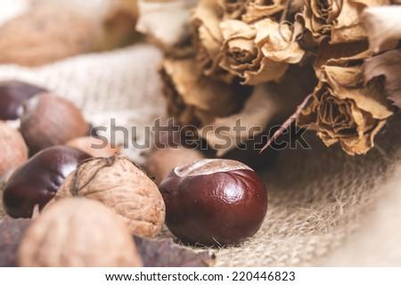 autumn dry flowers, chestnuts, walnuts, acorns, close - stock photo