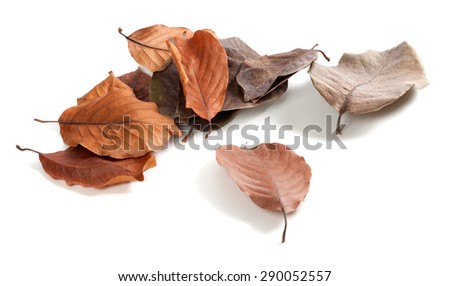 Autumn dry magnolia leaves isolated on white background - stock photo