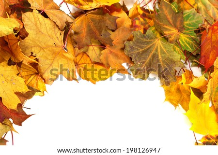 Autumn dry maple-leafs background with copy space - stock photo