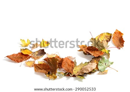 Autumn dry maple leafs isolated on white background with copy space - stock photo