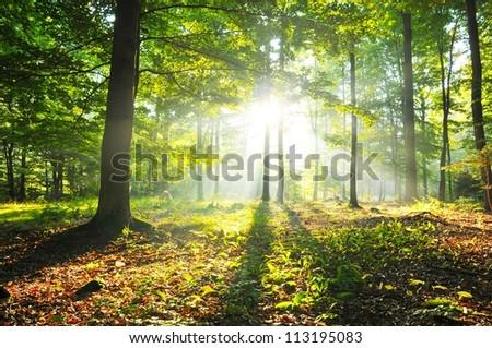 Autumn dusk in forest - stock photo