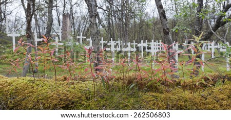 Autumn, fall and colored plants this side a cemetery. White cross on a hill. Wet leaves from a rain. Fire-weed. - stock photo