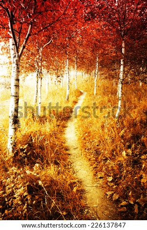 Autumn. Fall. Autumnal Park. Autumn Trees and Leaves. Autumn birch forest - stock photo