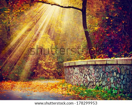 Autumn. Fall. Autumnal Park. Autumn Trees and Leaves in Sunlight Rays  - stock photo